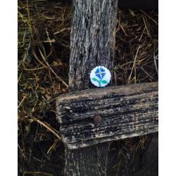 Brosa floare albastra